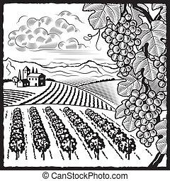 vingård, vit, svart, landskap