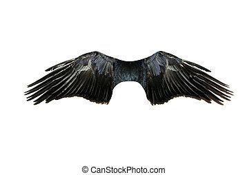 vinger