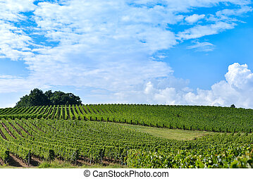 vinhedo, amanhecer, -, landscape-bordeaux, vinhedo