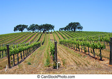 vinhedo, carvalho, árvores