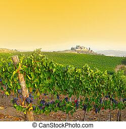 vinhedo, itália, tuscany, anoitecer