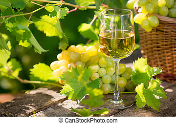 vinho branco vidro