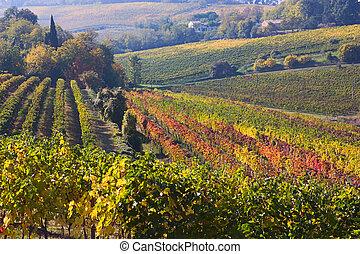 vinice, italský