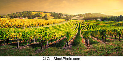 vinice, lehký