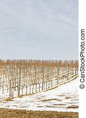 vinicky, eslovaquia, región, wineyards, tokaj