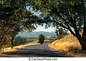 vino, país, sonoma
