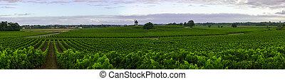 vino, viña, región, medoc, nouvelle-aquitaine, francia