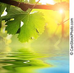 vinranka, vatten, över, blad