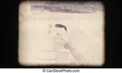 Vintage 8mm. Dog running
