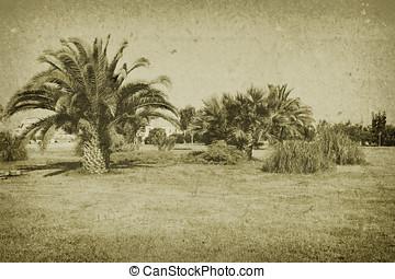 vintage aged photo