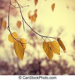 Vintage autumn leaves on tree