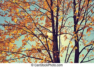 Vintage autumn maple