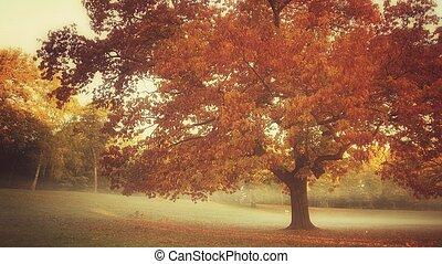 vintage autumn tree