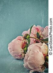Vintage background with pink peonies