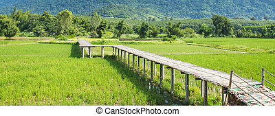 Vintage bamboo bridge on rice field.