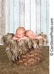 Vintage basket with twin babies - Ten days old newborn twin ...