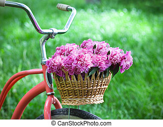 Vintage bicycle with basket with peony flowers in the spring...
