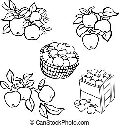 Vintage black apple harvest set. Fully editable EPS10 vector.