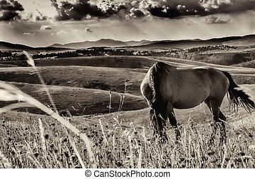 vintage black horse in a meadow
