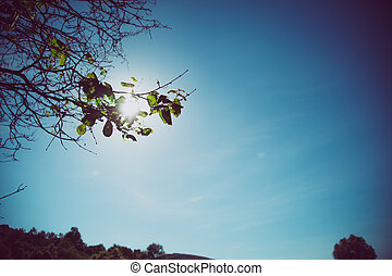 Vintage blue sky scene with green leaves on tree, faded background