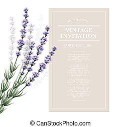 Vintage card with lavender flowers. Vector illustration
