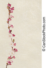 Vintage cherry flowers. - Delicate pink cherry blossom,...