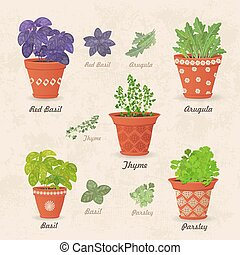 vintage collection of different herbs planted in ceramic pots an