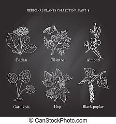 Vintage collection of hand drawn medical herbs and plants badan, cilantro, almond, gotu cola, hop, black poplar