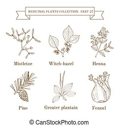 Vintage collection of hand drawn medical herbs and plants, mistletoe, witch-hazel, henna, pine, greater plantain, fennel.