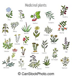 Vintage collection of medical herbs and plants. Color version