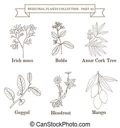 Vintage collection of medical herbs and plants - Vintage...