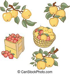 Vintage colorful apple harvest set.
