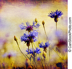 vintage cornflowers - blooming blue cornflowers on ambient...