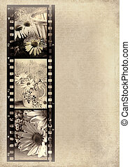 vintage daisy photos in film strip - Old-fashioned photos of...