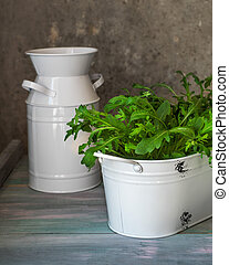Vintage decorative flower pots on a wooden table. Fresh growing arugula
