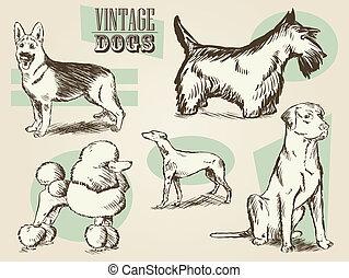 Vintage Dog Illustrations - Classic Retro Ornate Dog...