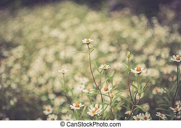 Vintage flower fields