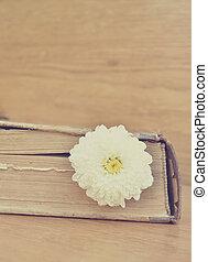 Vintage flower in old book