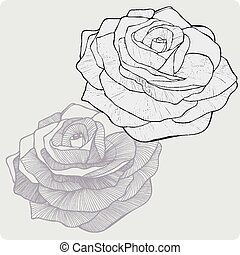 Vintage flower rose, hand-drawing. Vector illustration.