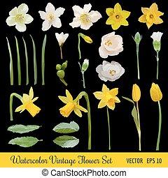 Vintage Flower Set - Spring Flowers - Watercolor Style - in vector