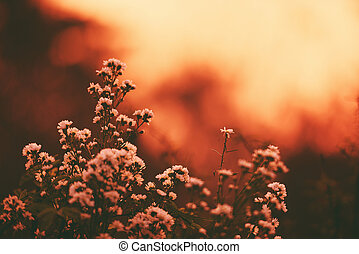 Vintage flower silhouette on sunset or sunrise nature background