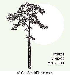 Vintage Forest Tree Design Template Vector Illustration