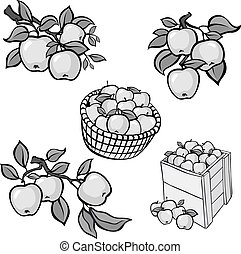 Vintage grey apple harvest set. Fully editable EPS10 vector.