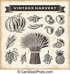 Vintage harvest set - A set of fully editable vintage fruits...