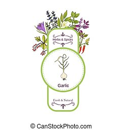 Vintage herbs and spices label collection. Garlic