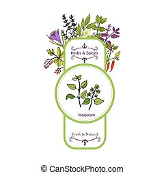 Vintage herbs and spices label collection. Marjoram