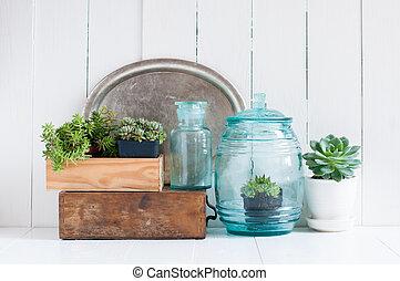 Vintage home decor: houseplants, green succulents, old ...