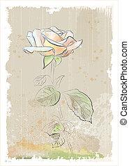 vintage illustration of  pink rose