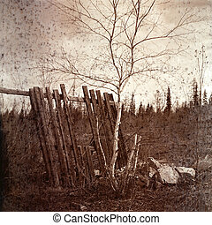 Vintage image of a landscape. Old fence and birch.
