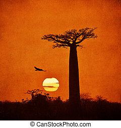 Vintage image of Baobab